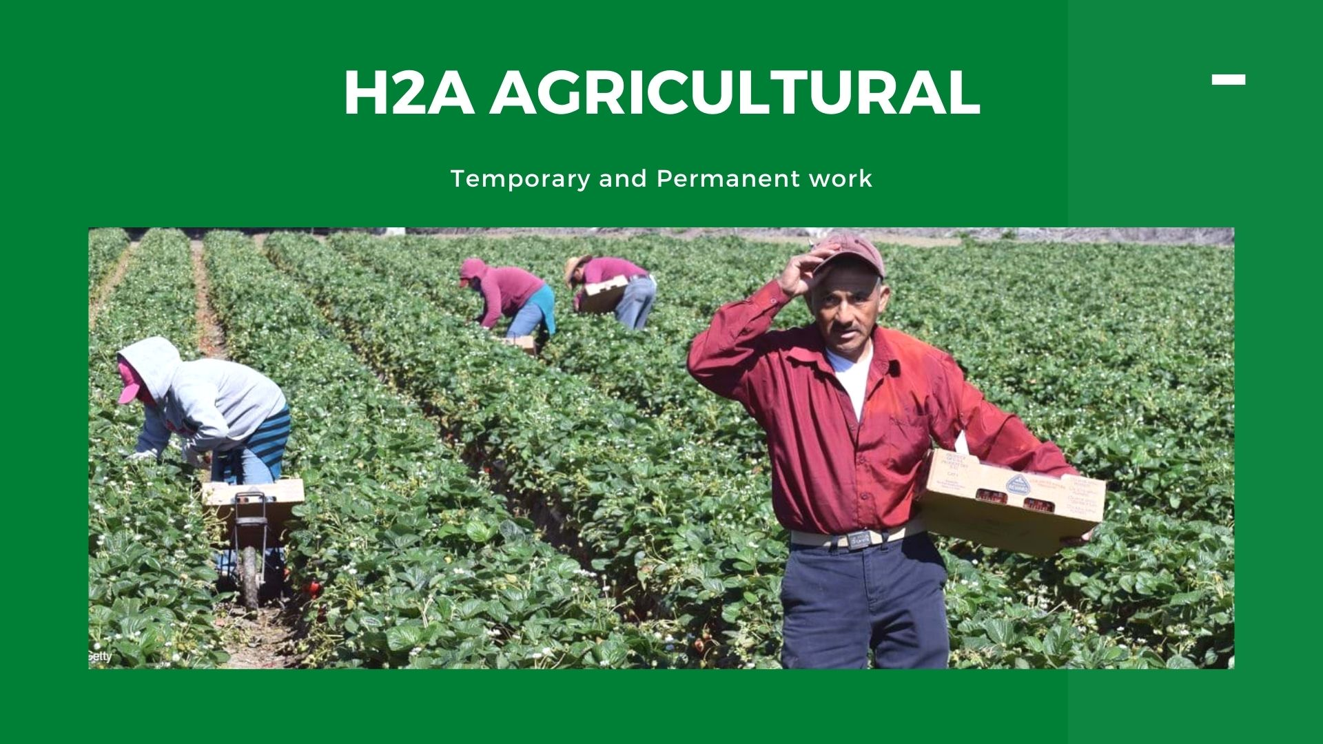 H2A AGRICULTURAL